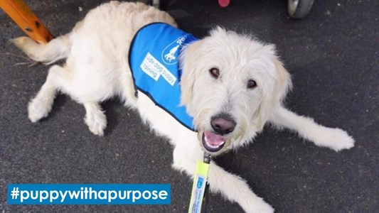 What Freedom Do Guide Dogs Give Blind People