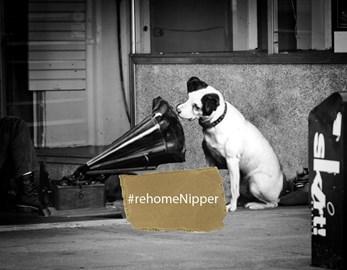 Re-home Nipper & Thousands like him!