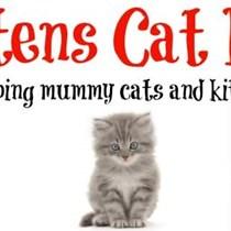 Mittens  Cat rescue