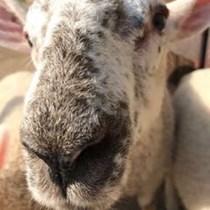 Lisa James Animal Foundation