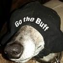 Cal Buff