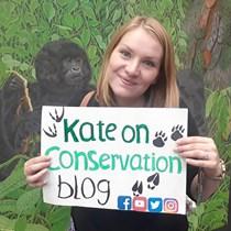 Katie Stephenson