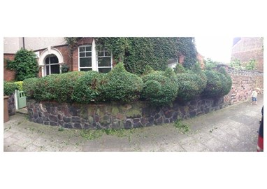 Four hedge creatures appearing in Clapton