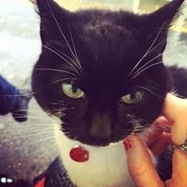 Fanny Cat