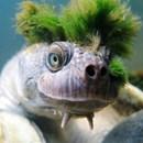 Edd Bowdeenifishx