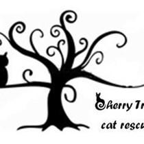Cherry Tree  Cat Rescue