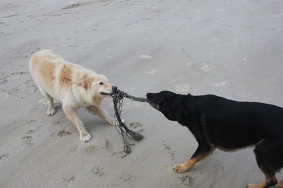 Helping cleaning the beach...sort of