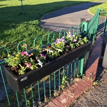 Burtonwood in Bloom