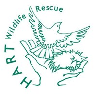 Hart Wildlife Rescue