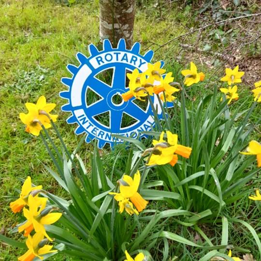 Fermoy Rotary Daffodil Day