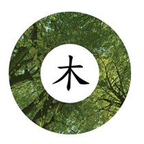Chinese Medicine Forestry Trust