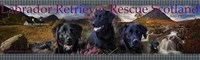 Labrador Retriever Rescue Scotland SCIO