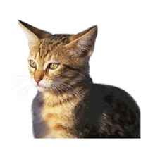 Feline Network cat rescue