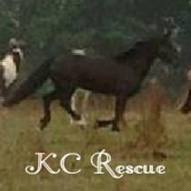 KC Horse Rescue