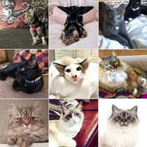Cats Of Birmingham