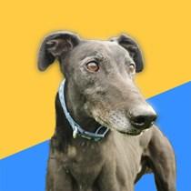 Seaside Greyhounds