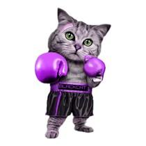 Woodhouse Boxing Club