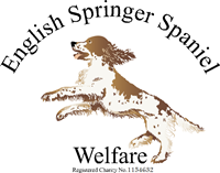 English Springer Spaniel Welfare