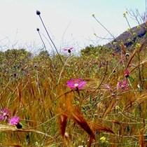 Ros Meadow