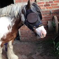 Equine Headshaking Awareness