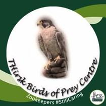 Thirsk birds Of Prey Centre