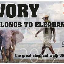 Ivory Belongs To  Elephants
