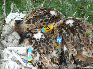 dead birds found in Scotland 2014