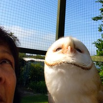 BOPH Barn Owl Project & Bird of Prey Hospital