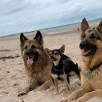 GERMAN SHEPHERD DOG RESCUE ~NORTH EAST REGION~