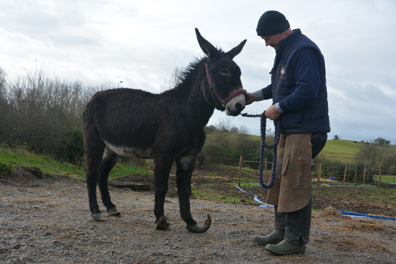 The Donkey Sanctuary - JustGiving