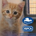 Bristol Dogs and Cats Home and RSPCA Bristol & District Branch
